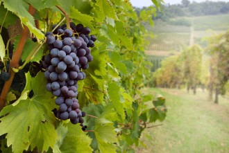 Visit Benalla Tours - North East Winery Tour